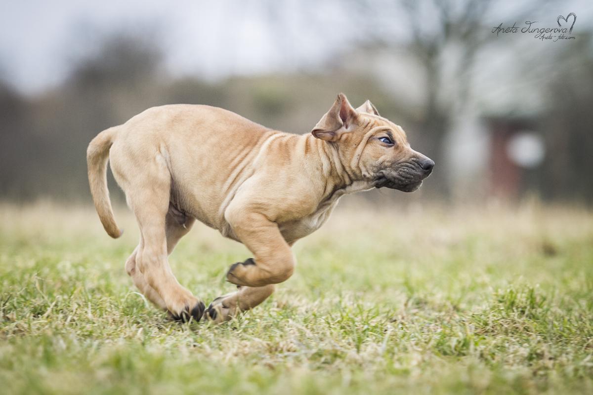 Péče o pohybový aparát vašeho psa