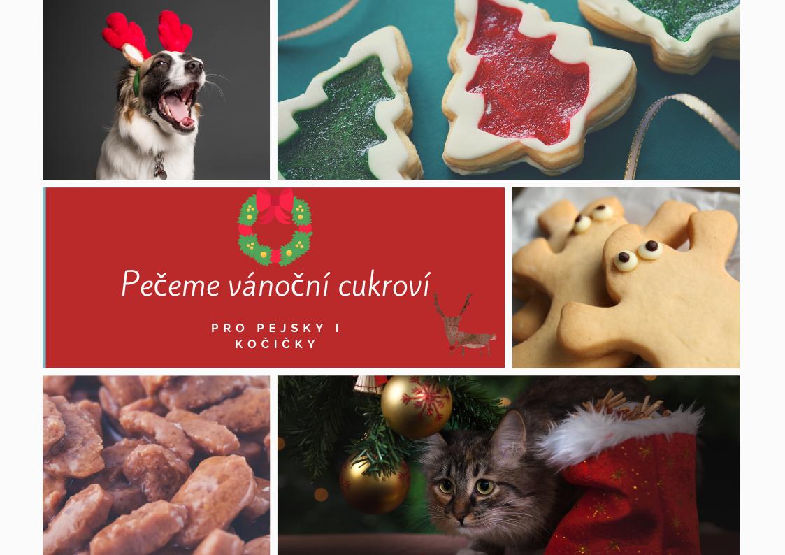 Pečeme vánoční cukroví pro pejsky a kočičky