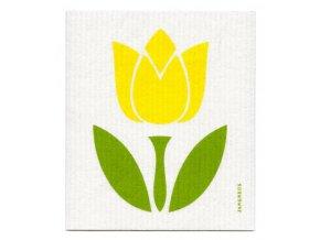 jangneus zlty tulipan