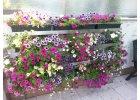 Vertikální květinová stěna
