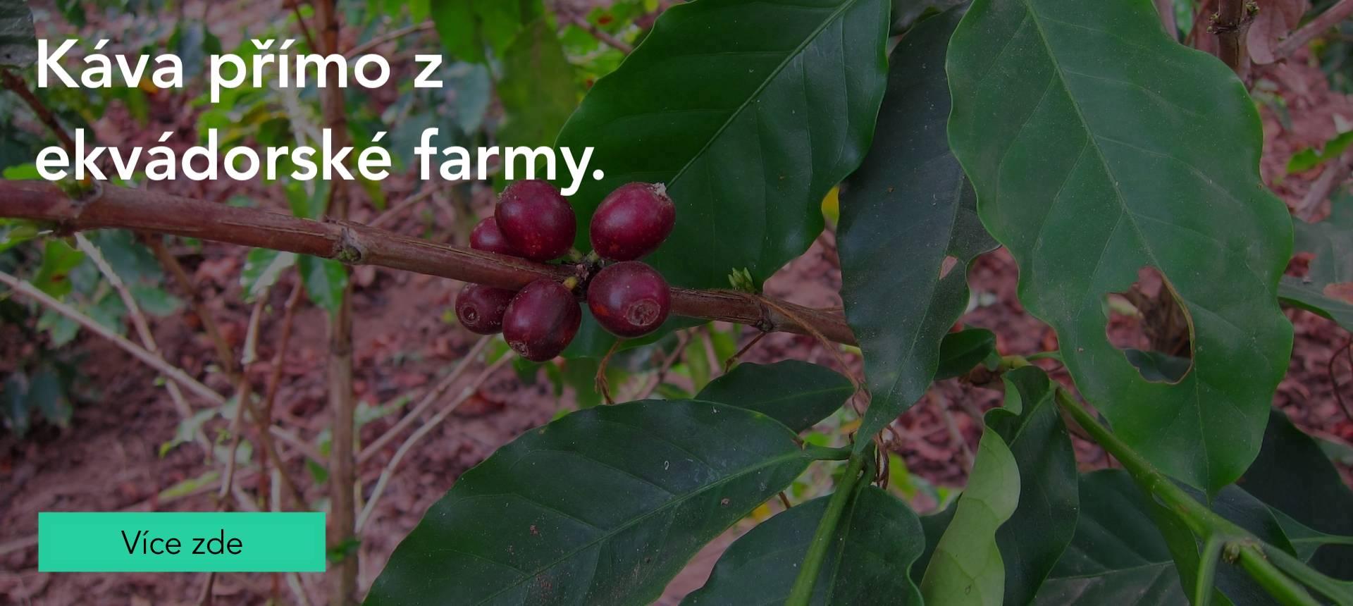Výběrová káva přímo z farmy