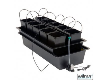 Wilma 10