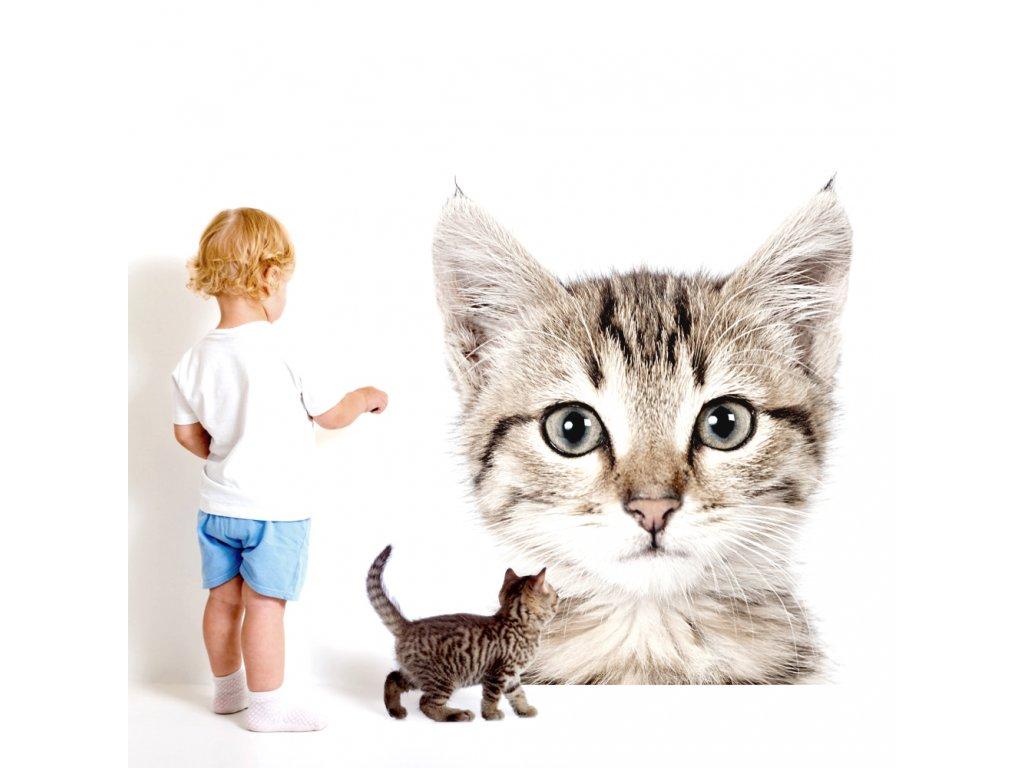 Samolepku kočičky ve větších velikostech můžete použít jako zajímavou fototapetu a vtisknout dětskému interiéru neotřelý design.