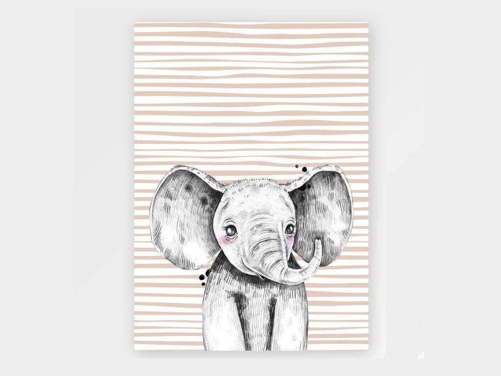 Plakát Slon šedý