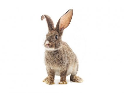 Nálepka na zeď zvířátka králík