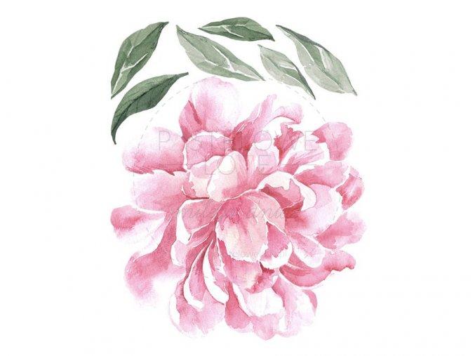 Nálepka na zeď květy pivoňky jednotlivé růžová