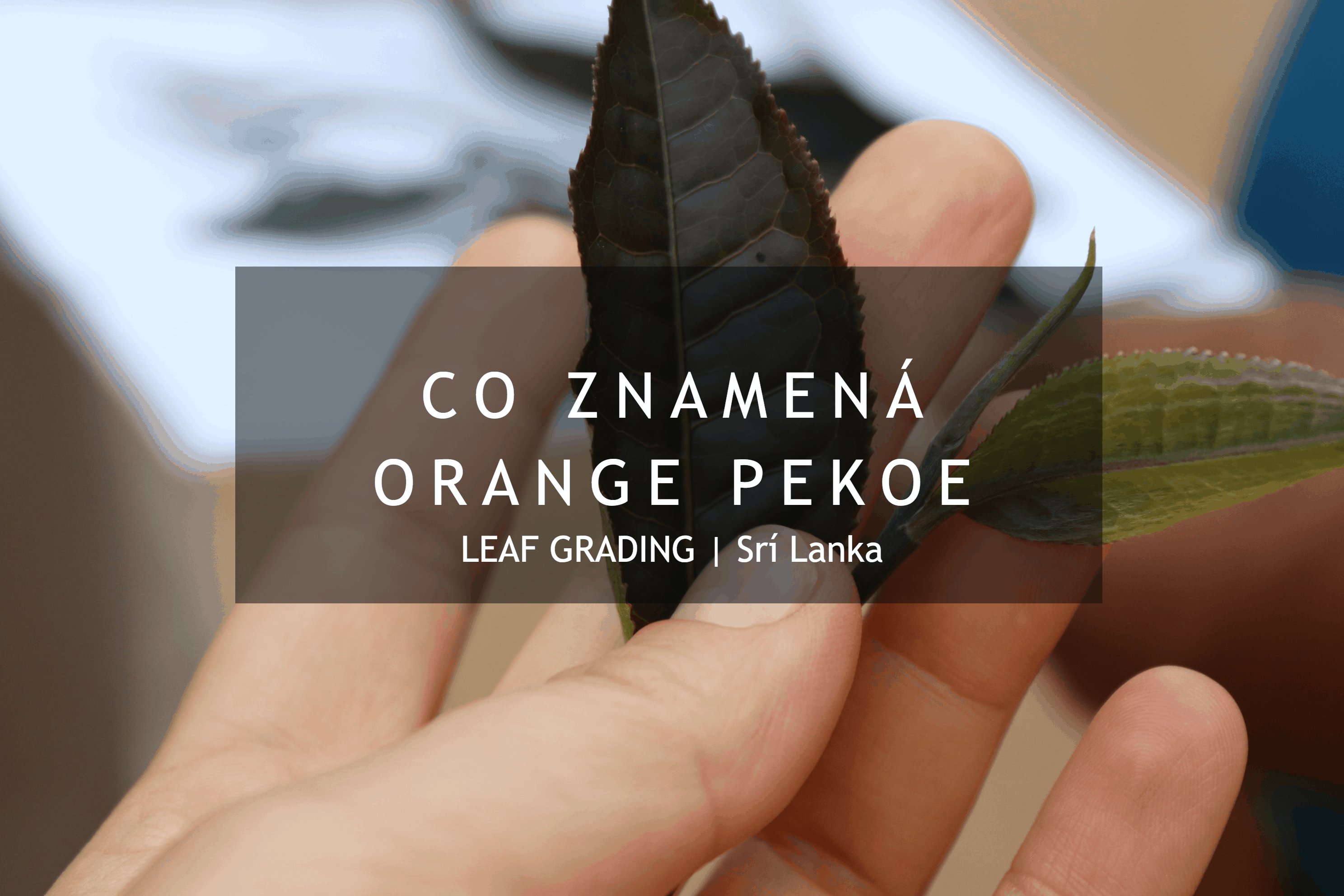 Co znamená Orange Pekoe?