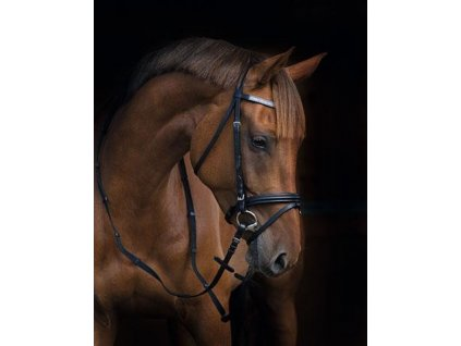 Kerbl - Uzda pro koně Stardust Black Pony 325403 / ROZBALENO
