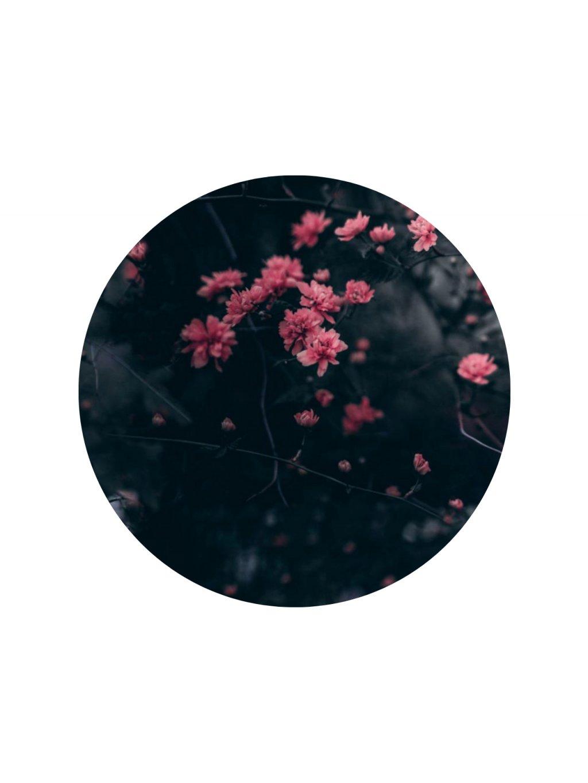 Ledové květy - zimní softshell s bílým chloupkem fleecu v rubu 10.000 mm H2O