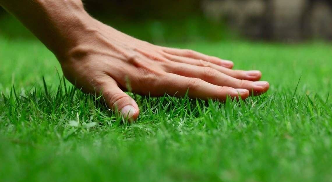 Víme, co je základem perfektního trávníku. Chcete to prozradit?