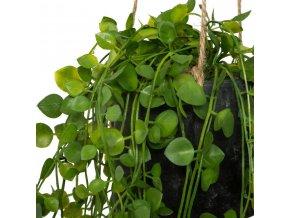 Umělý břečťan k zavěšení, rostlina jednoduchá na údržbu