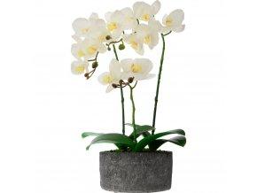 Umělá květina, tři orchideje s bílými květy v šedém cementovém květináči