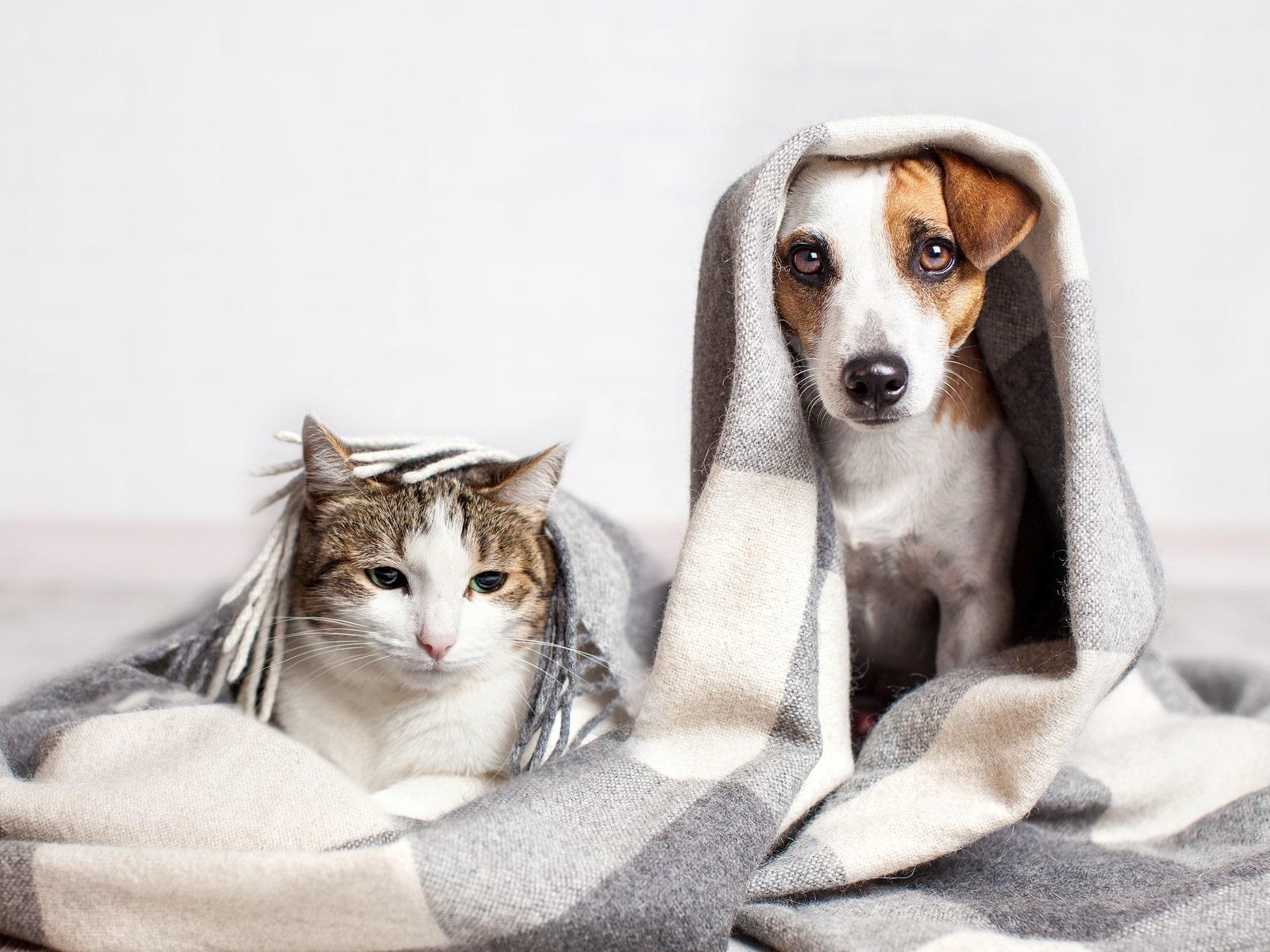 Víte, že vaše zvíře se může otrávit i doma?