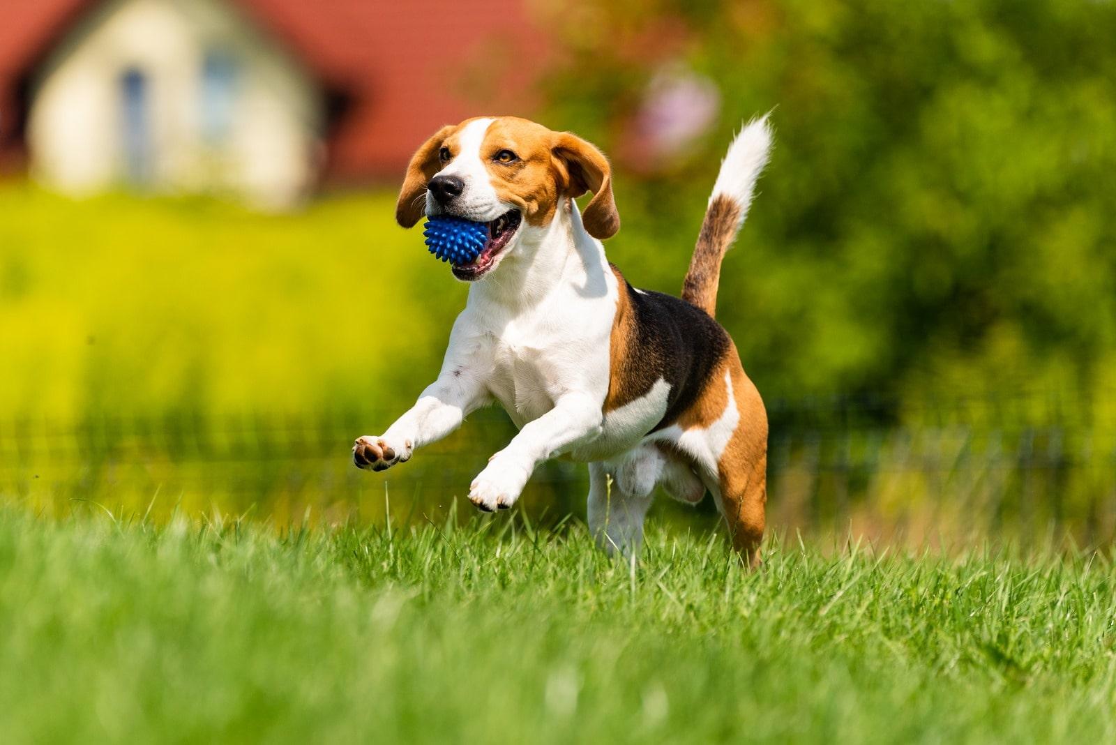 Onemocnění kloubního aparátu psů