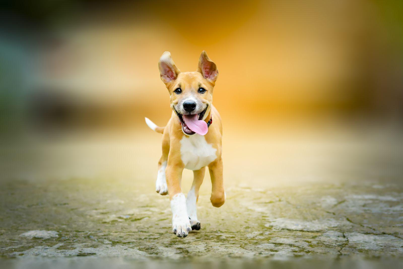 4 nejčastější onemocnění kloubního aparátu psů a jak k nim přistupovat