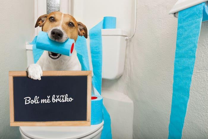 bigstock-Dog-On-Toilet-Seat-138288578-min
