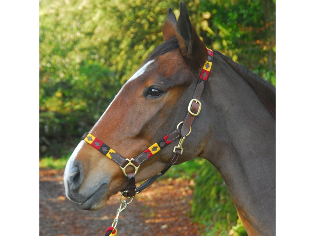 chukka headcollar and lead 04