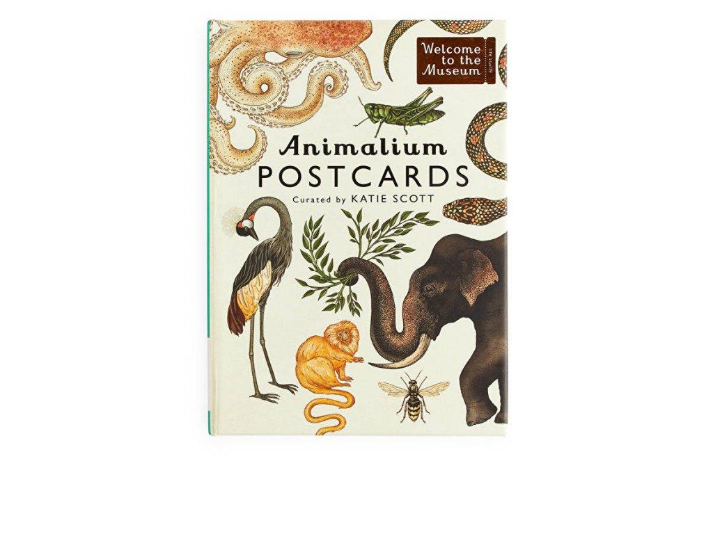 animalium post01