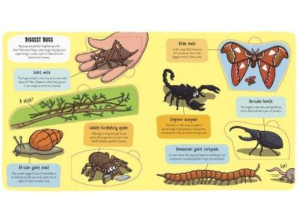 Bugs - Little Explorers