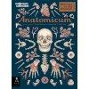 3648 anatomicum