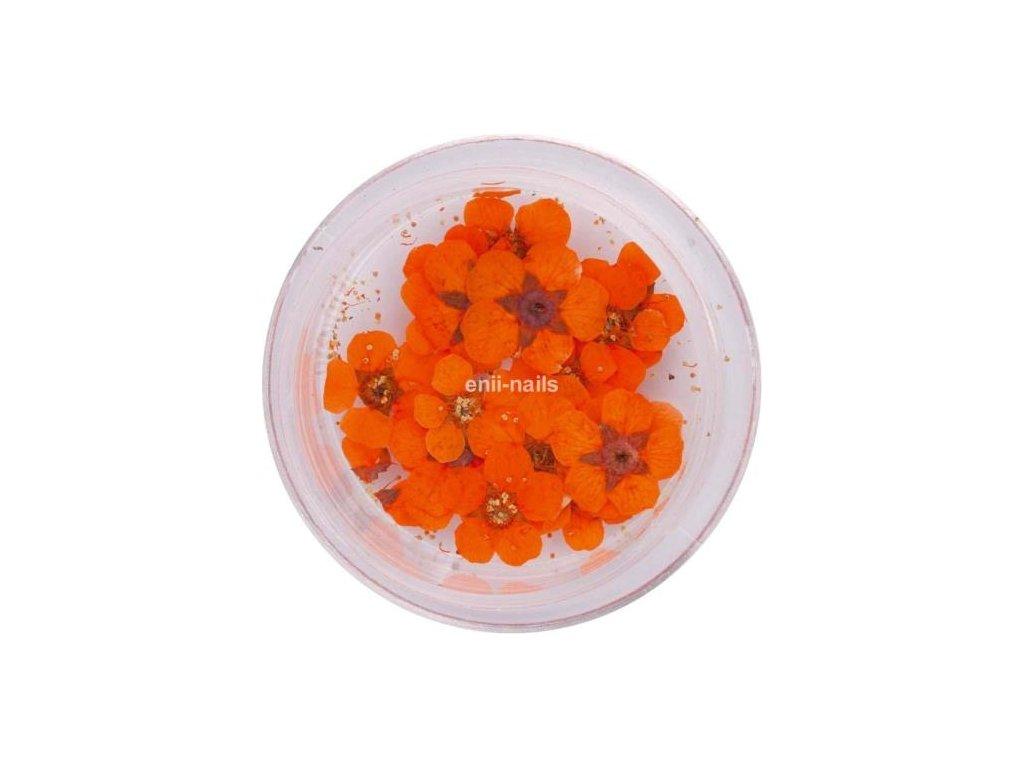 Sušené kvety