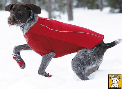Oblečenie pre psov