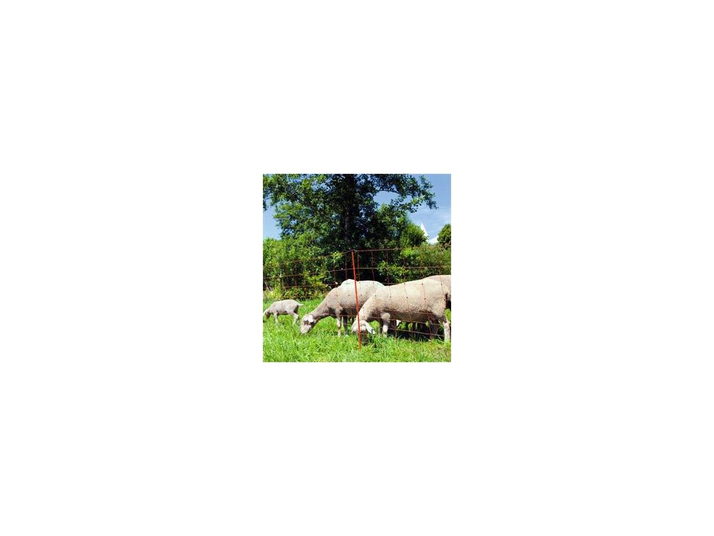 Síť ovce 1