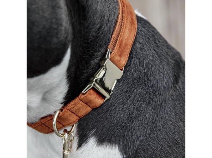 kentucky dogwear dog collars leads dog collar velvet mustard a929523bbdd099ba1a676b6771a9e673 article photobook m