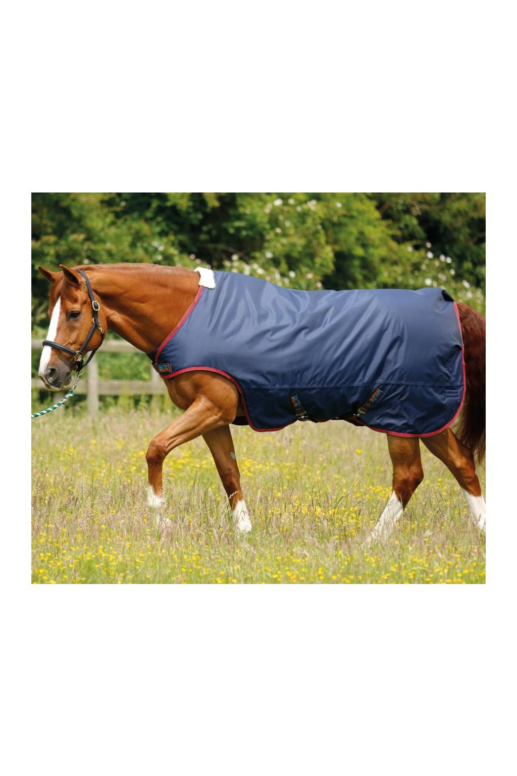 Walker Rug AW16 zoomx900