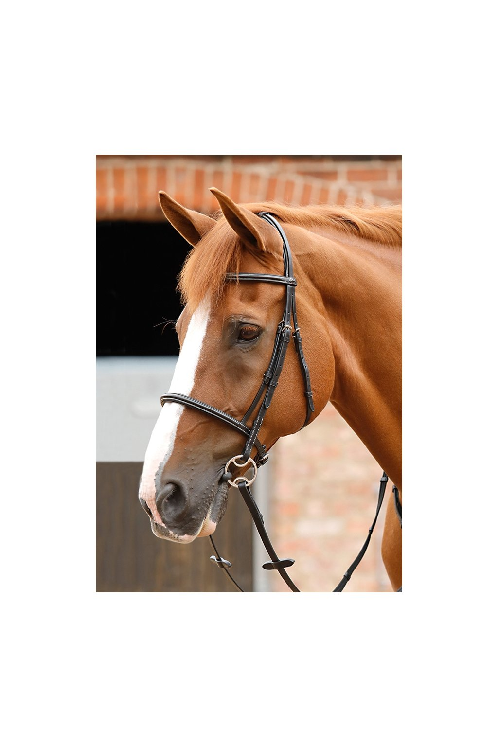 12 Bella Cavesson Bridle Black Webx900