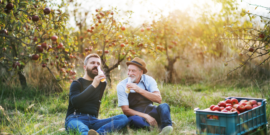 senior-man-with-adult-son-drinking-cider-in-apple-orchard-in-autumn-picture-id1059999146