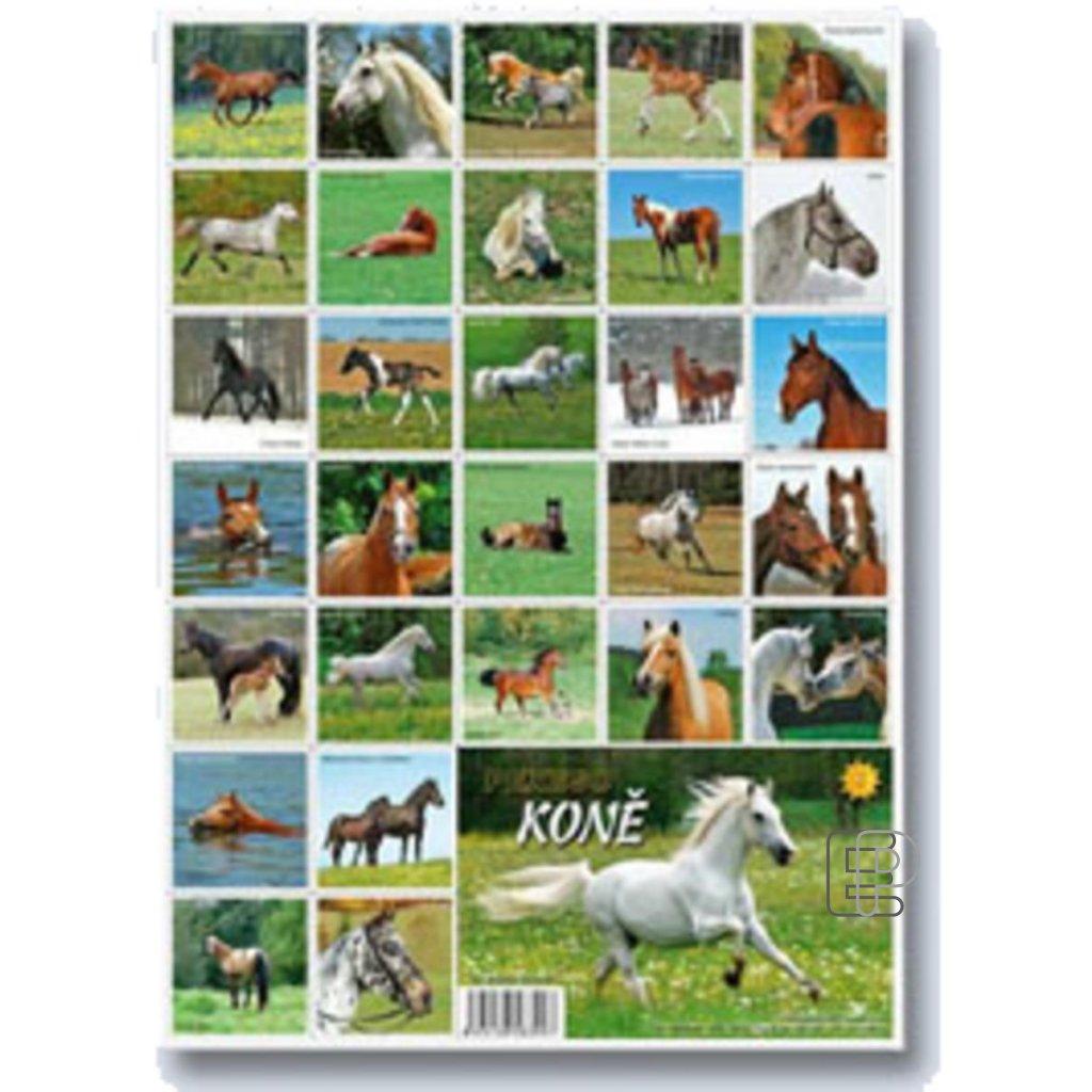 Pexeso Koně   5300904
