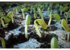Semena zajímavých rostlin