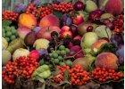Plody, ovoce, zelenina