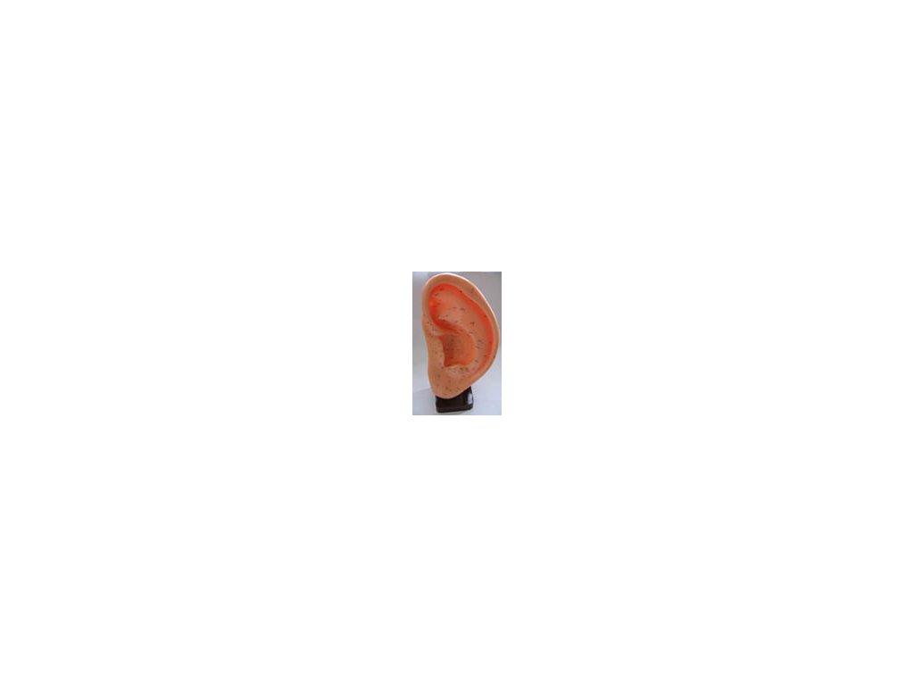 Akupunkturní model ucha 22cm