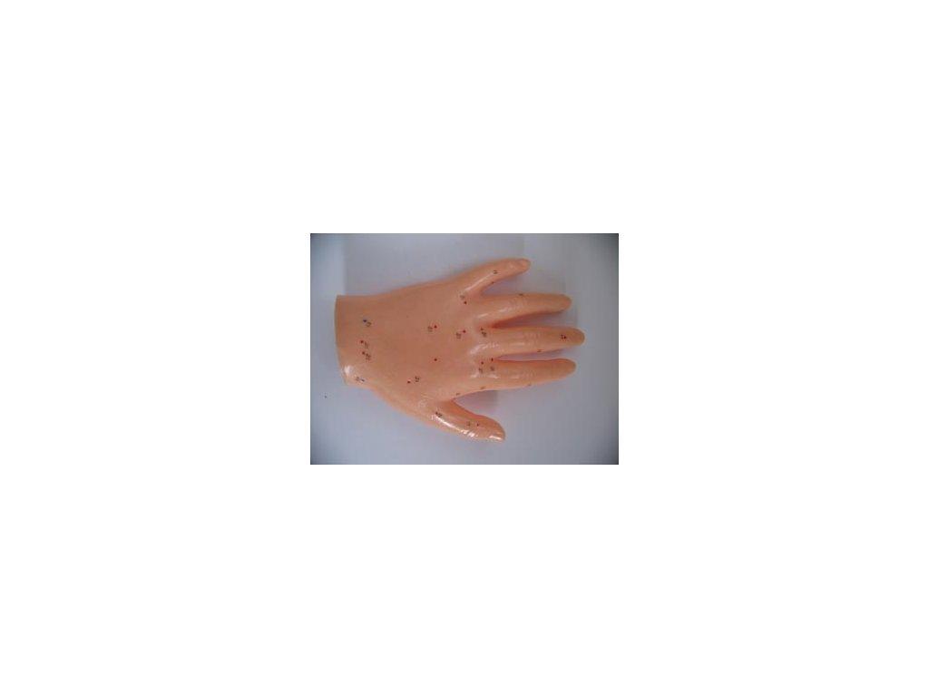 Akupunkturní model ruky 12cm