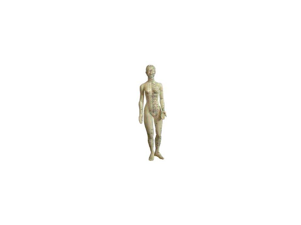 Akupunkturní model žena 48cm