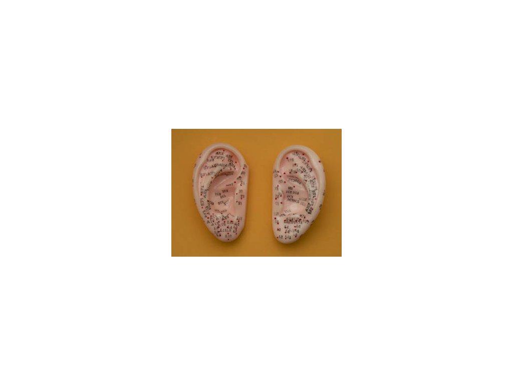 Akupunkturní model uši 7cm