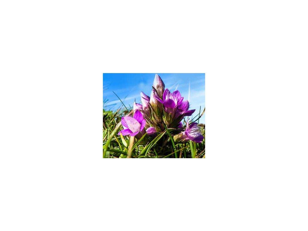 Hercampuri - Genitanella alborosea 1000g