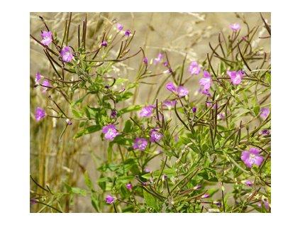 Vrbovka malokvětá mletá nať 100g