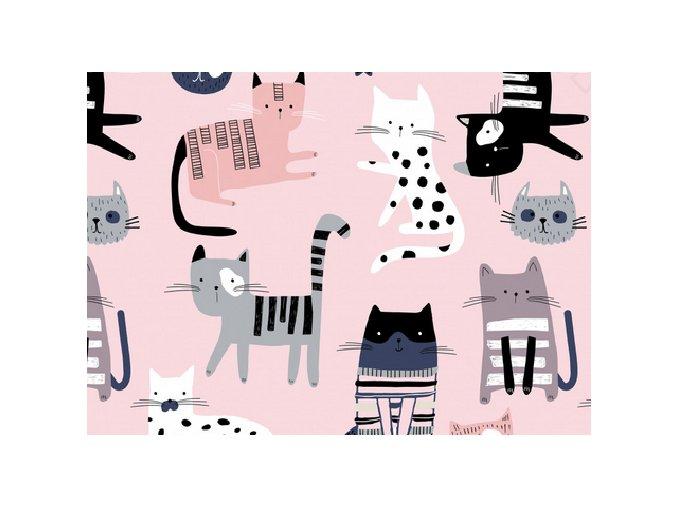 kočky na růžové