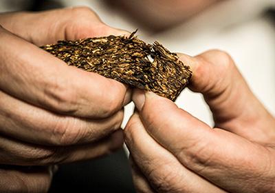 Co je vlastně tabák