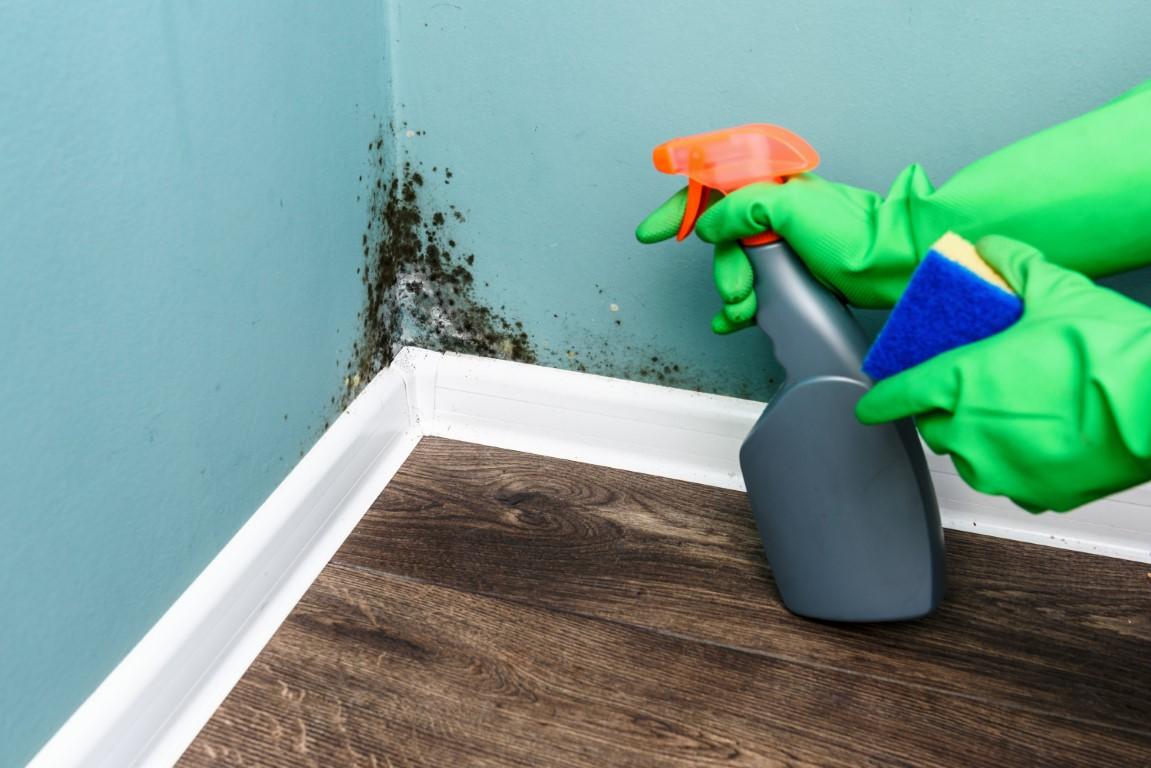 spray-bottle-and-sponge-near-black-mould-wall-P9PUE3M