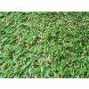 Umělý trávník - Jutagrass Garden