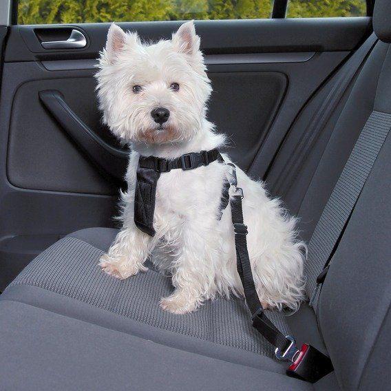 Postroj do auta pro psa Trixie Velikost: XS 20 - 50 cm