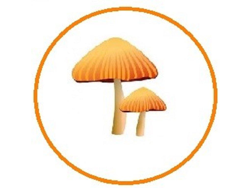 houby 768