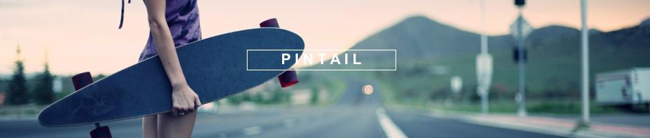 pintail1
