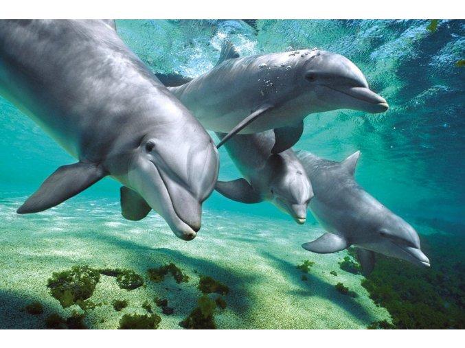 dolphin under