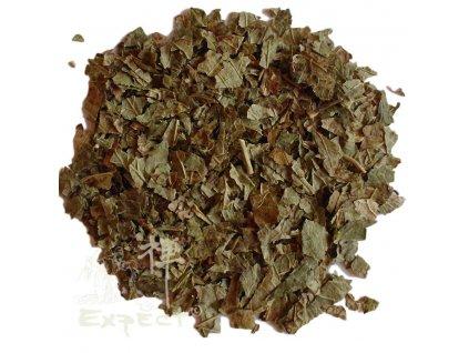 Ginkgo biloba list / Jinan dvoulaločný