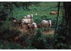 Pro chov zvířat a dobytka